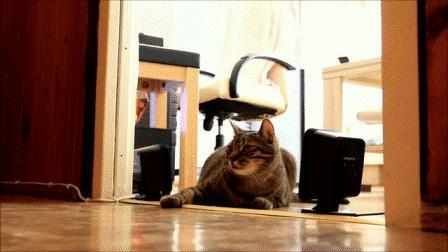 Противовоздушный кот