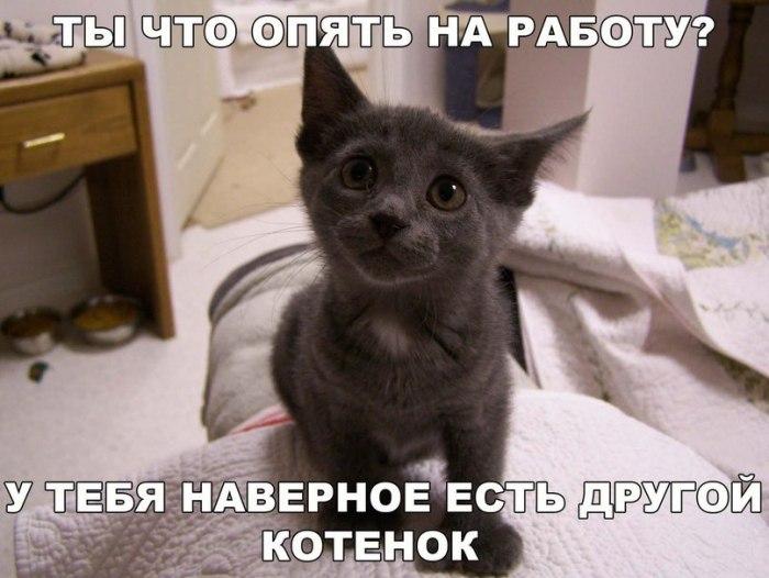 Смешные котята, ты на работе смешные картинки