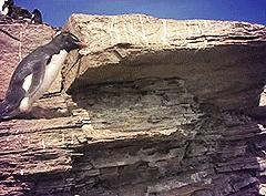 Обычные будни обычных пингвинов
