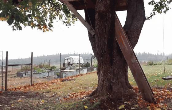 Дерево наносит ответный удар