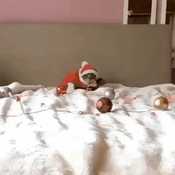 Кошачий Дед Мороз