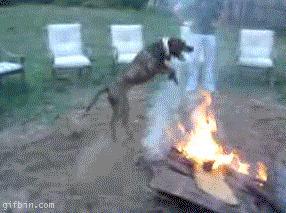 Пес празднует ивана купала