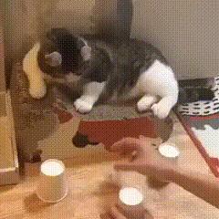 Кот и наперсточник