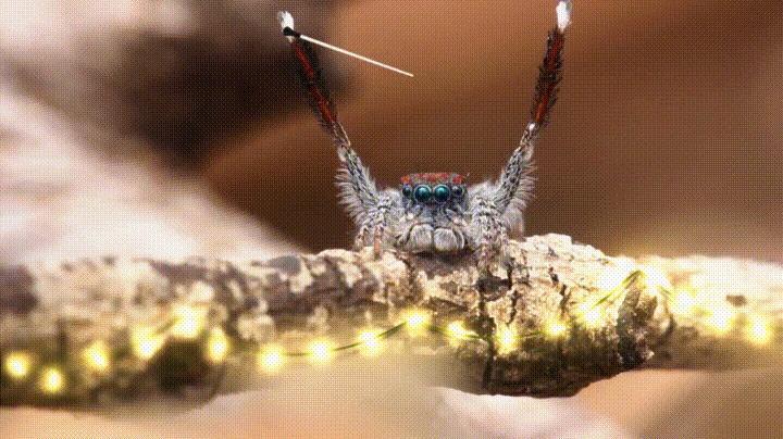 Новогодние пауки