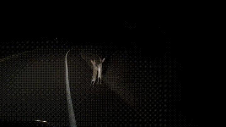 Ночь... тишина... и тут кролики что-то не поделили