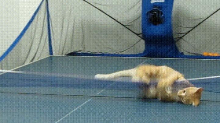 Кот теннисист