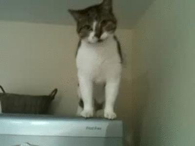 Кот научился ходить по холодильнику