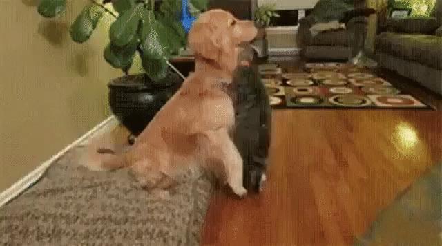 Друзья по жизни