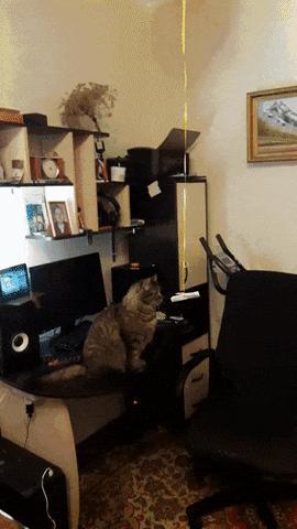 Чем занять кота?