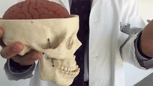 Что происходит при сотрясении мозга