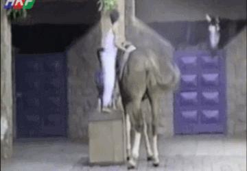 Это мой конь и я на нем езжу