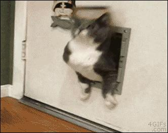 Кошачий Винни Пух
