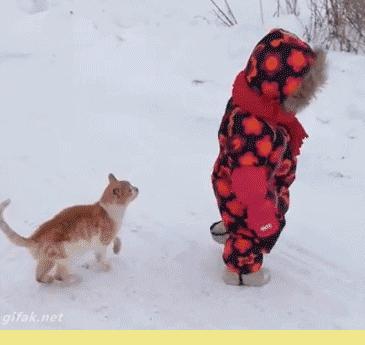 Коварная кошачья атака