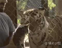 Ну что Барсик, хотел кошек - получай! Или все-же к ветеринару?
