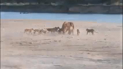 Слоненок который смог